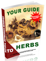 Your Guide to Herbs