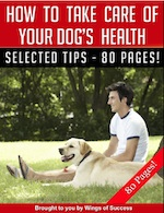 How to Take Care of Your Dogs Health