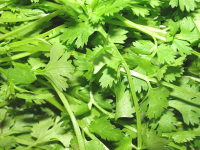 Coriander_leaves
