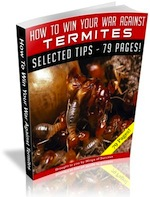 How-To-Win-Your-War-Against-Termites