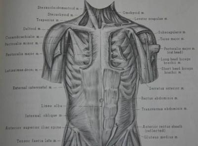 The+human+body+illustrated+diagram