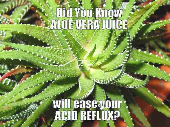 aloe-vera-juice-for-acid-reflux - meme