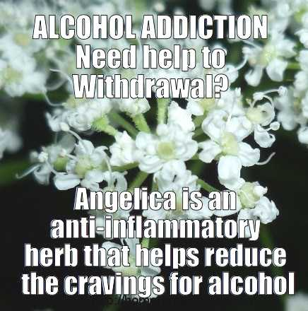 angelica herb for alcohol addiction - meme