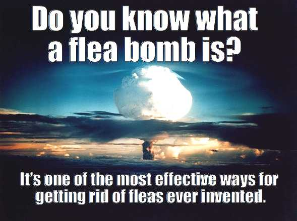 flea bomb - meme