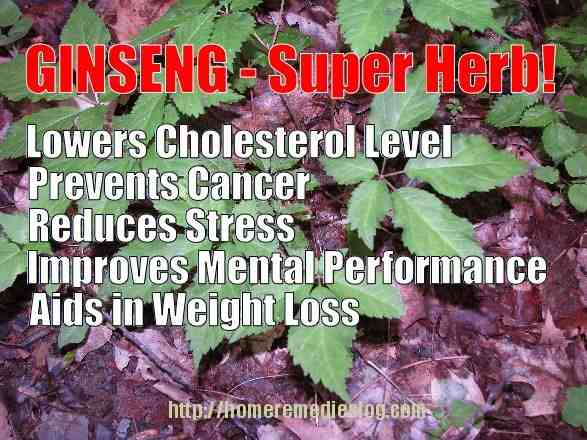 ginseng benefits meme optimized