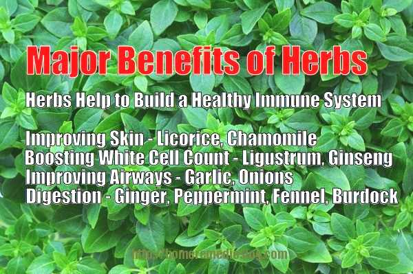 herbs for immune system memeoptimized