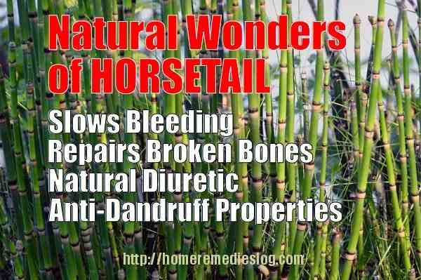 horsetail herb meme