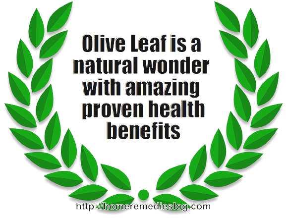 olive-leaf-illustrated-designoptimized