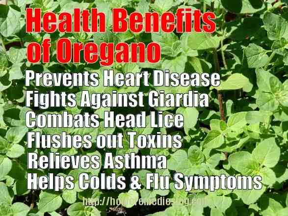 oregano benefits meme optimized