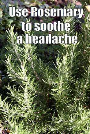 rosemary for headaches - meme