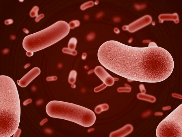Bifidobacteria – Enhance Your Well-Being