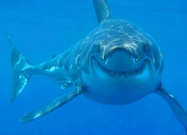 Shark Cartilage – Is it an Effective Alternative Cancer Treatment?