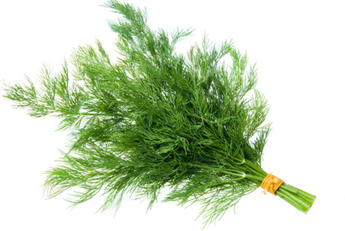 Dill – Medicinal Health Benefits