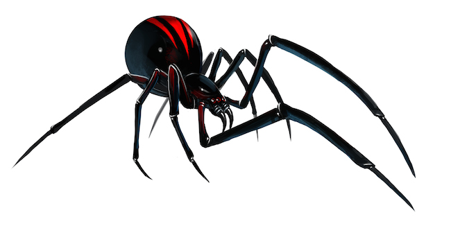 How To Treat A Black Widow Spider Bite At Home
