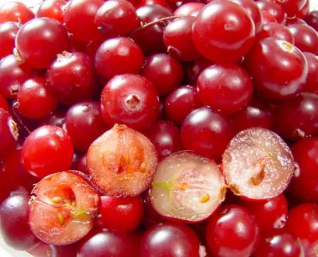 Cranberry Juice – The Amazing Benefits of Cranberries